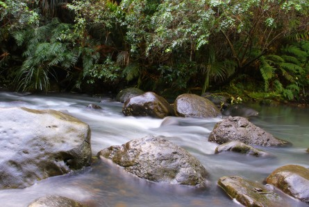 Waitakere Water